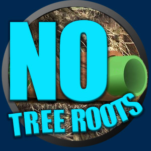 No tree roots